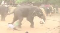 大象游行中突然发狂 横冲直撞掀翻数人