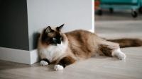 揭秘: 12星座和哪种动物最相似? 天蝎座是安静腹黑的布偶猫