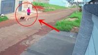 美女遛狗回家, 路过邻居门口, 监控拍下狗狗失控的全过程!