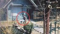 动物园饲养员棒打丹顶鹤 园方: 饲养员被啄后反击