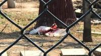 石家庄动物园丹顶鹤被打视频曝光