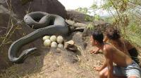 兄弟俩发现石洞下有一条大蟒蛇, 他们竟敢钻进蛇窝去偷蛋, 厉害了