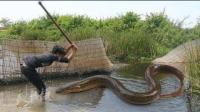农村小伙挖骗鱼坑捕鱼, 这下收获可不小, 够吃几天了