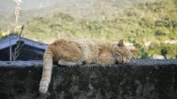 小猫咪沉迷网吧,突然一天,它觉悟了!