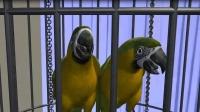 男子卖6鹦鹉一审获刑后案件又经历哪些曲折?
