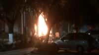小车撞树自燃车内几人被困 路人冒死砸窗救人