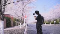 九筒带你探寻上海最美的一条樱花小道