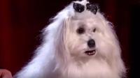 第18期 全球第1只会说话的狗