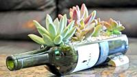 以后不要扔掉饮料瓶子看看国外大神多么神奇的创意瓶园理念