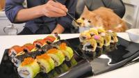 文艺青年, 美系寿司与淡定的橘猫