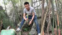 欢子钻进树林搞野货, 发现吃竹笋动物, 最后他收获一大竹筐