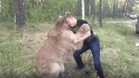 俄罗斯的熊应该是全世界地位最低的熊吧