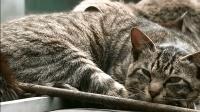 咿呀咿呀之小小认知乐园 第16集 小猫