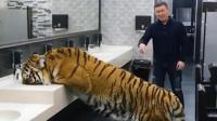 上洗手间遇到老虎在喝水, 该怎么办