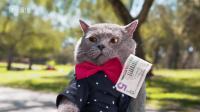 猫咪也是分富二代和乞丐的(54期)