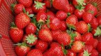 亲, 草莓园等你呢