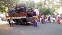 在街头看到大象从货车上走下来
