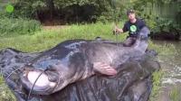 钓鱼: 经过漫长的搏斗, 终于钓获这条300多斤的巨型鲶鱼王