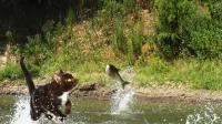 厉害了我的猫! 流浪猫抓鱼, 一爪子下去路人纷纷鼓掌!