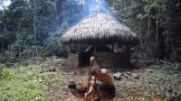 澳洲小哥徒手建圆型小屋, 之前的茅草屋被雨淋坏了