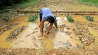 原始技术农田开垦完成, 用有机肥料肥沃土地