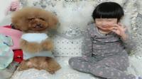 小姑娘在泰迪狗旁边吃肉肉, 把泰迪犬馋的一直作揖