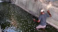 奇趣: 钓鱼突然发现瀑布下面的墙缝里有刀鳅!