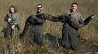 村民发现6米长的蟒蛇! 怪不得老是丢家禽, 后来合力捉住巨蟒!