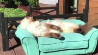 躺在专用沙发上晒太阳的猫咪, 让人甚是羡慕!