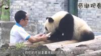 这是一个会和大熊猫讲道理的奶爸 关键熊猫得听啊