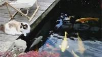 人不如猫系列, 晒晒太阳赏赏鱼, 这日子太安逸了!