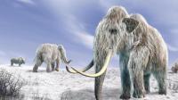 作为冰川时代的幸存者, 为什么老鼠没成为地球统治者?