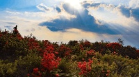 贵州百里杜鹃之外的一个地方, 杜鹃花满山遍野, 美丽极了