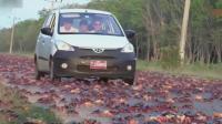 古巴螃蟹泛滥成灾, 路上轮胎都被扎爆了, 当地人: 中国人来也没用
