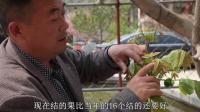 蓟州农家院老板不务正业, 京八对核桃出自他手, 香港文玩核桃爱好者都来买