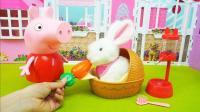 小猪佩奇的宠物拉比兔玩具