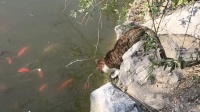我的天! 猫咪一巴掌下去就是一条鱼, 技术杠杠的, 佩服!
