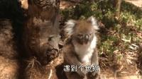 重庆方言动物配音: 你这辈子, 有没有为人拼过命