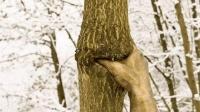 世界上最孤独的手, 紧握一棵树50年, 从未松开过!
