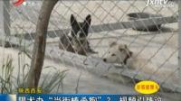 """陕西西安: 限犬办""""当街捧杀狗""""? 视频引热议"""