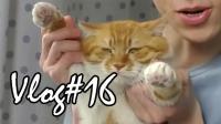凯麒Vlog#16: 粉丝们送的生日礼物