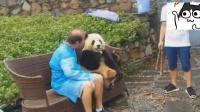 老外和大熊猫拍照, 笑的一脸灿烂, 大熊猫吃个不停