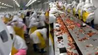 食品加工厂内起内讧 工人们互殴抛扔小龙虾