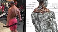 14个锻炼斜方肌的方法