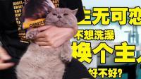 如何给猫洗澡(简单难度体验)