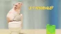仓鼠第一次用马桶, 忘记带纸, 它是怎么解决的呢?