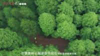 【精彩回顾】日照马拉松热身赛 带你穿过森林大海