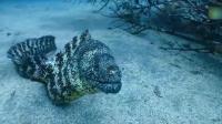 实拍海鳗想来吃鱿鱼, 鱿鱼一股墨喷了过去, 直接逃离!