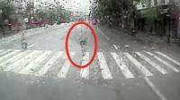 公交司机雨天斑马线礼让行人 行人鞠躬道谢