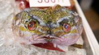 【日本街头美食】25 冲绳 红海鱼海鲜汤
